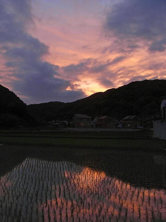 080525田んぼと夕焼け1