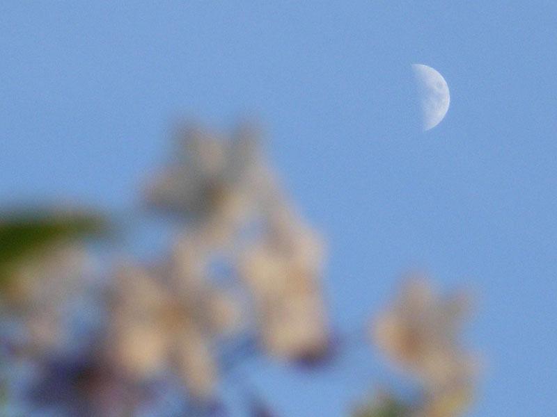 080610朝の花、夕の花5
