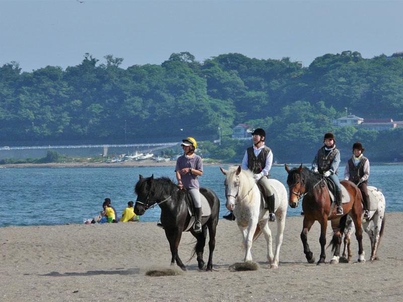 080611三浦海岸と馬1