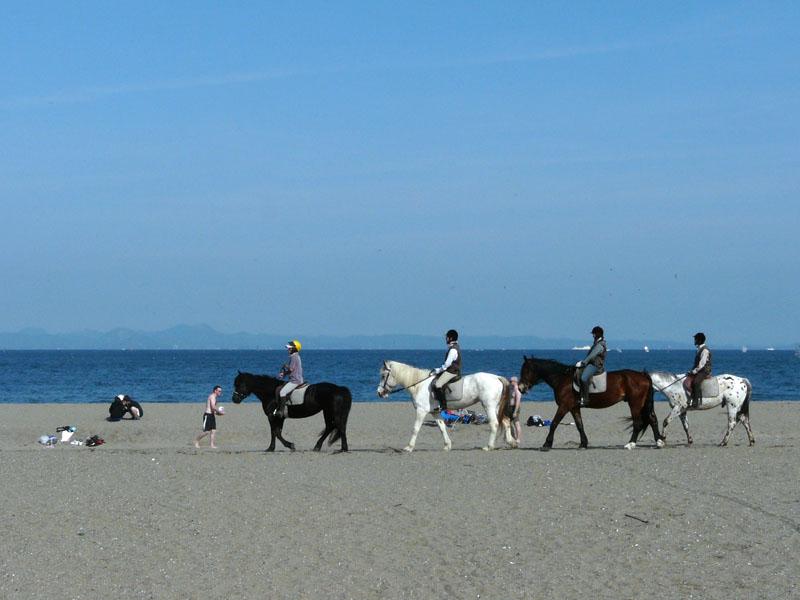 080611三浦海岸と馬2