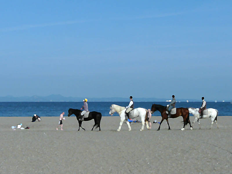 080611三浦海岸と馬2.5