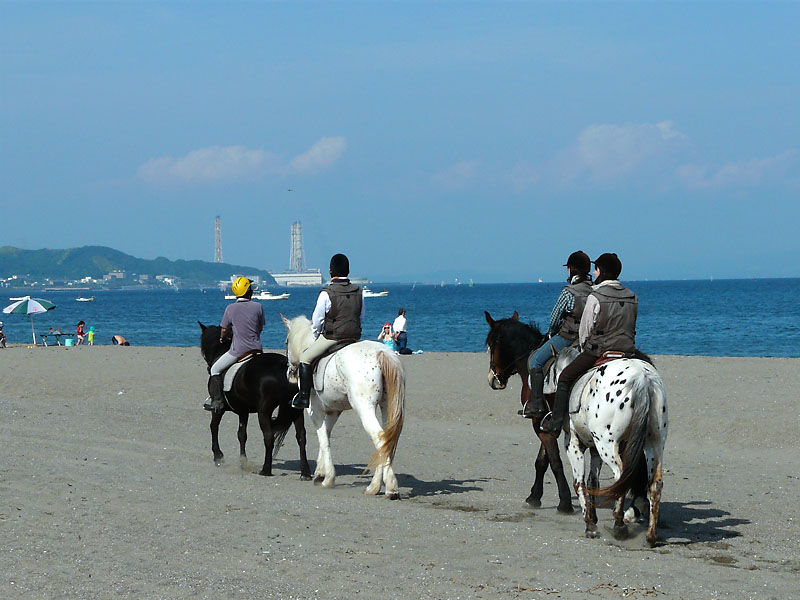 080611三浦海岸と馬3