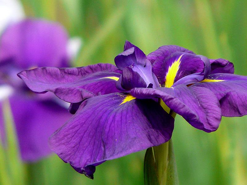080614YRPの花たち2