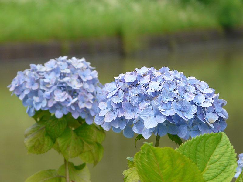 080614YRPの花たち4