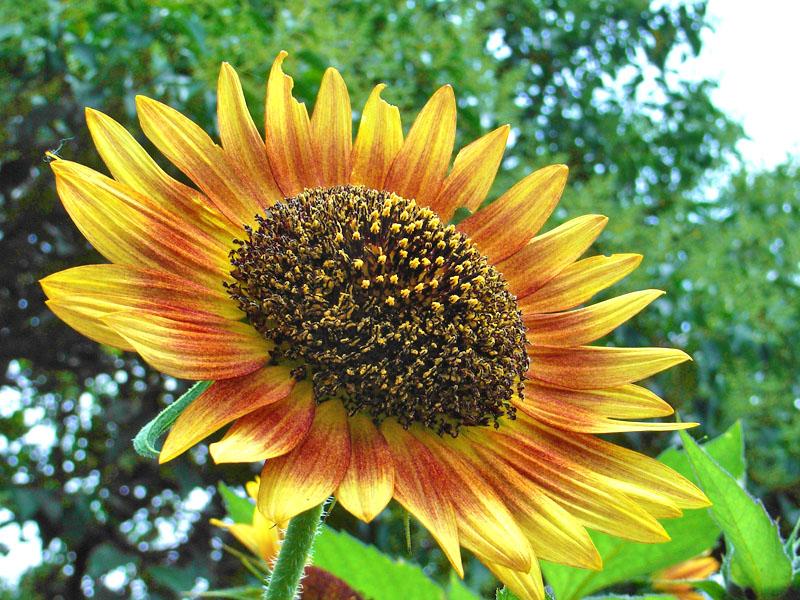 080618花は季節を先取りする1