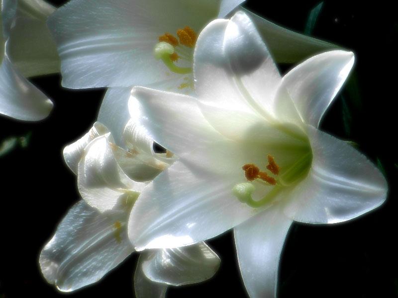 080618花は季節を先取りする3