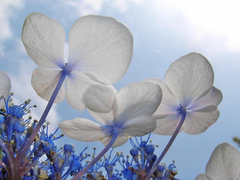 080618花は季節を先取りする4