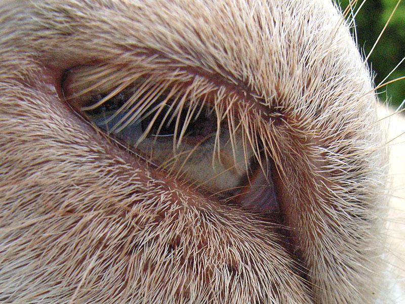 動物の目3