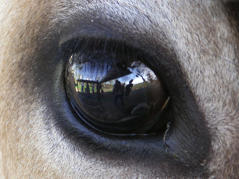 動物の目5