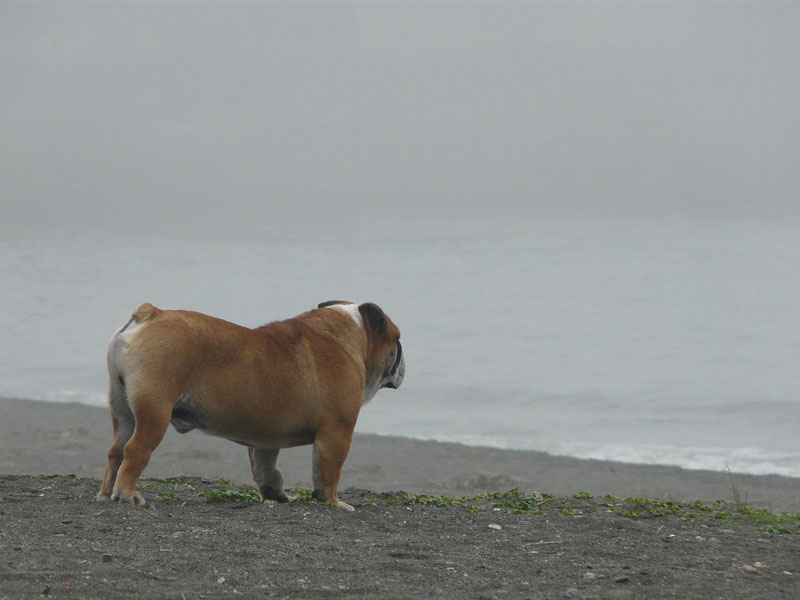 080713霧の平塚海岸5