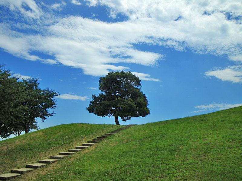 榎の丘の夏1
