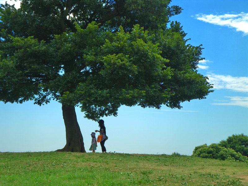 榎の丘の夏3