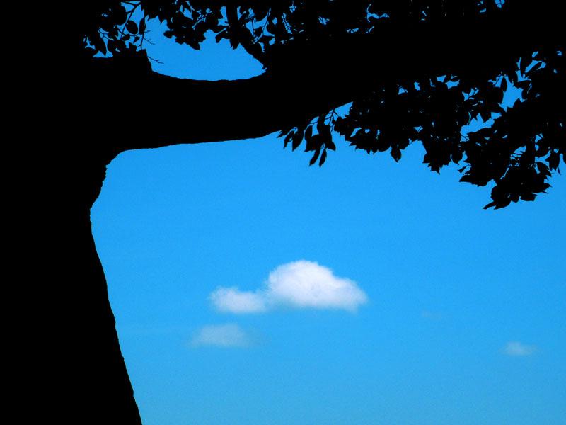 榎の丘の夏4