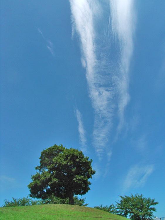 080806今日の雲1