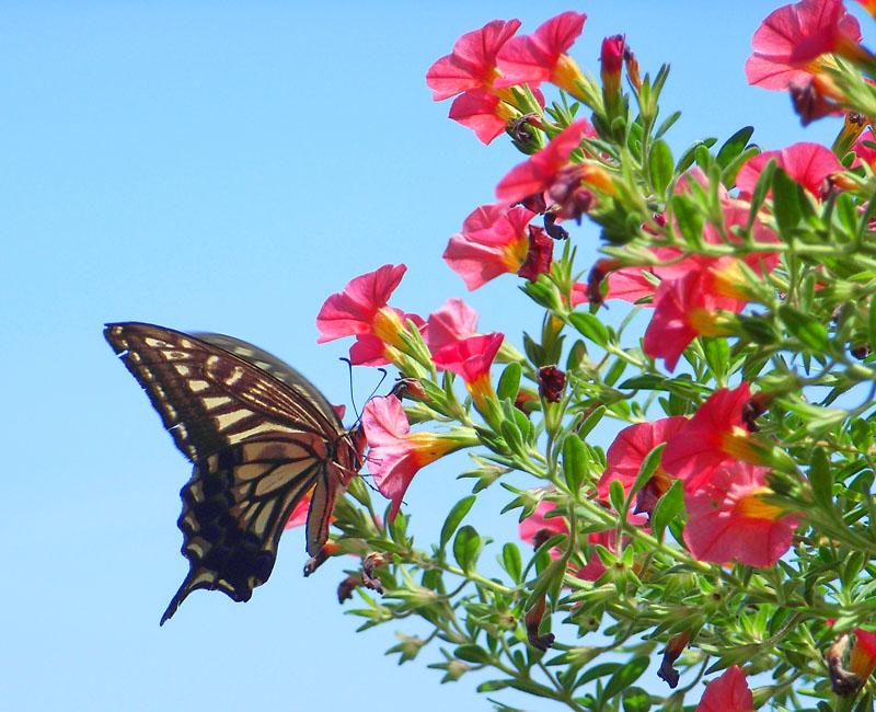 胡蝶の夢1