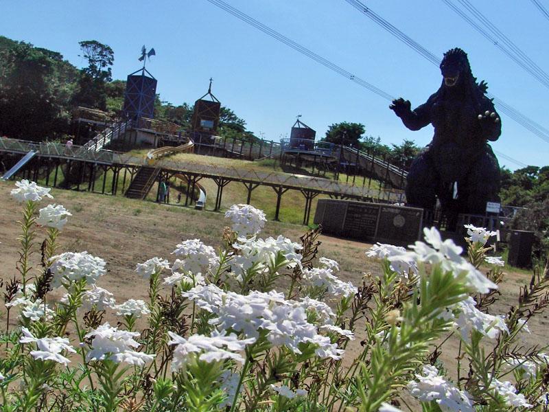 080816花の国4
