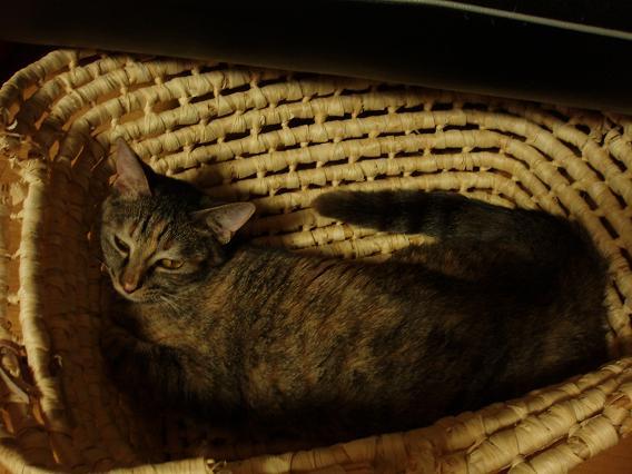 猫20080804 023-1