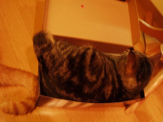 猫20080804 049-1