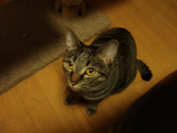 猫写真2 024-1