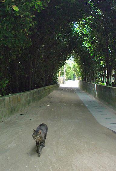 フクギ並木を歩く