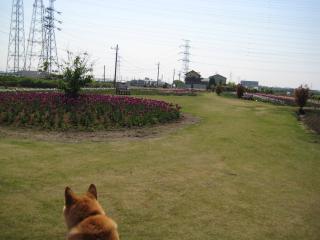 芝生もきれい