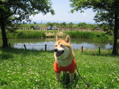 さくら公園1