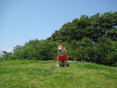 さくら公園6
