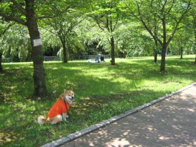 さくら公園7