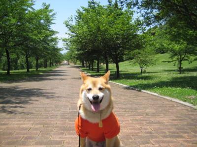 さくら公園8