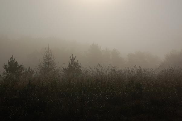 6.10.22.11.jpg
