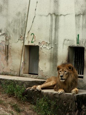 lion4.jpg