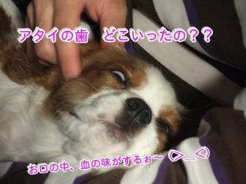 14_convert_20090424221620.jpg