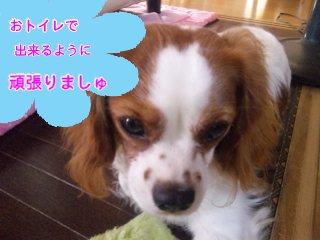 himawari0908161.jpg