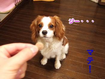 himawari0908212_convert_20090821212934.jpg