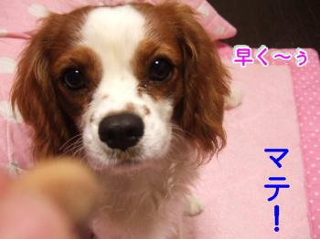 himawari0908215_convert_20090821213511.jpg