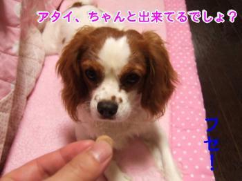 himawari0908216_convert_20090821213554.jpg
