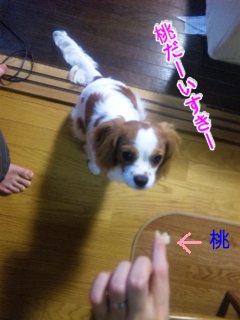 himawari116.jpg