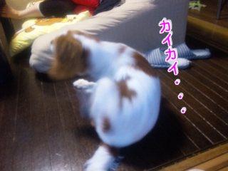 himawari117.jpg