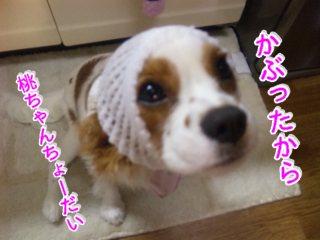 himawari119.jpg