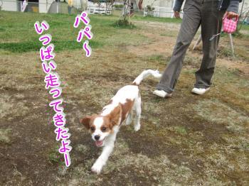 himawari11_convert_20090506000231.jpg