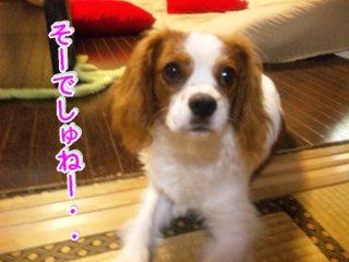 himawari120.jpg