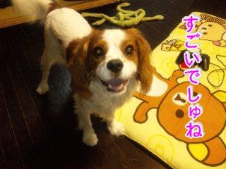 himawari128.jpg