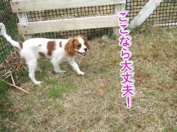 himawari12_convert_20090506000311.jpg