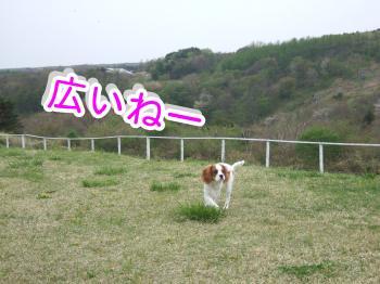 himawari16_convert_20090506004056.jpg