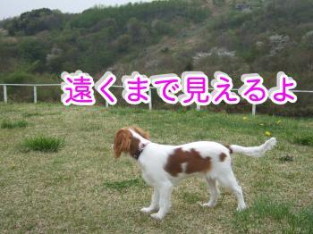 himawari17_convert_20090506004226.jpg
