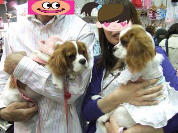 himawari20_convert_20090506181406.jpg