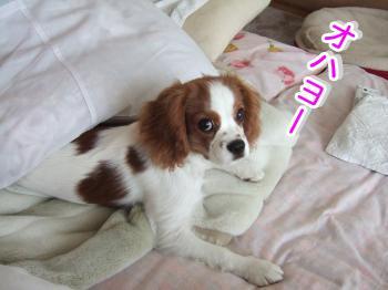 himawari23_convert_20090507190912.jpg