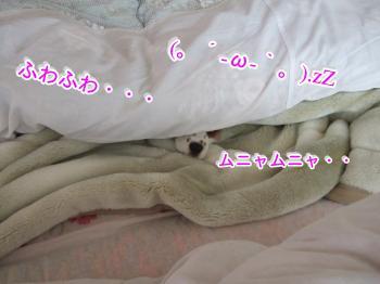 himawari25_convert_20090507190802.jpg