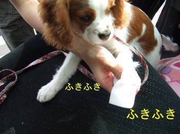 himawari27_convert_20090507203213.jpg