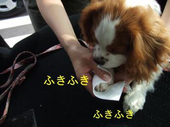 himawari28_convert_20090507203243.jpg